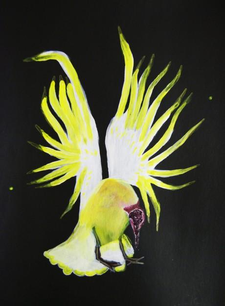 Les oiseaux ne sont pas encore morts #5